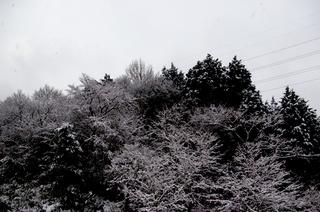 20110216-2.jpg